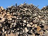 Brennholz in Paletten - photo 5