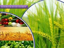 Hersteller und Lieferant von Pestiziden weltweit