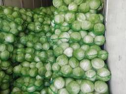Fresh cabbage, harvest 2019.