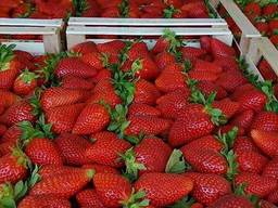 Клубника свежая Македония Fresh strawberries Macedonia