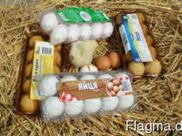 Kunststoffverpackungen für Eier, Beeren, Früchte, Fleisch, E