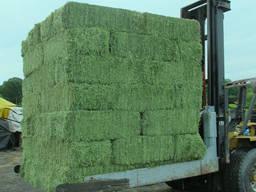 Natürliches Vieh Alfalfa Hay Tierfutter zu verkaufen