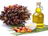 Пальмовое масло - фото 1