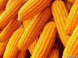 Пшеница , ячмень , соя, кукуруза