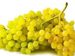 Виноград оптом из Узбекистана