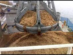 Wood chips for export